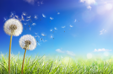 Blog: All About Allergy Season